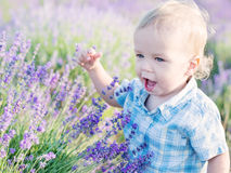 Happy baby boy in lavender. Summer field Royalty Free Stock Images