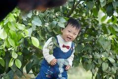 Happy baby boy in lemon trees. Happy baby boy  play hide  and seek  in lemon trees Royalty Free Stock Photos