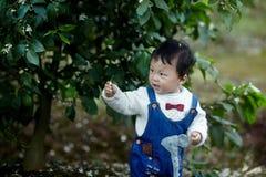 Happy baby boy in lemon trees. Happy baby boy  play hide  and seek  in lemon trees Royalty Free Stock Image