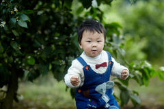 Happy baby boy in lemon trees Stock Photos