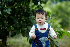 Happy baby boy in lemon trees Stock Photography