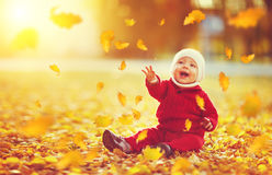 Happy baby boy throws autumn leaves and laughs Stock Image