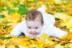 Happy baby girl in autumn park on yellow leaves. Happy laughing baby girl playing in an autumn park on yellow leaves Stock Photography