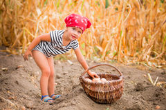 Happy baby girl on the garden with harvest of potatoes in the basket near field  dry corn  background. Dirty child in red bandana Stock Photo