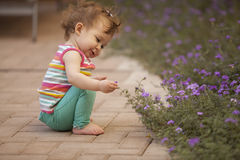 Happy baby girl picking flowers Stock Image