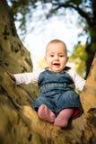 Happy baby on tree Stock Photography