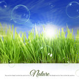 Happy background with grass Stock Photo