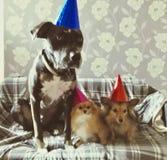 Happy bark day! royalty free stock photography