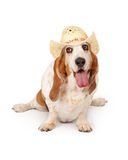 Happy Basset Hound Dog Cowgirl Stock Photo
