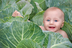 Happy beautiful baby in green cabbage leaves royalty free stock photography