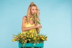 Happy beautiful blonde caucasian woman with big box of tulips on blue background. royalty free stock photos