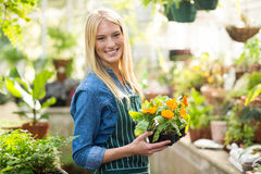Happy beautiful gardener holding potted flowers Royalty Free Stock Photography