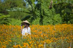 Happy and beautiful young Asian woman wearing traditional hat enjoying excited the fresh beauty of orange marigold flowers field n stock image