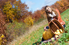 Happy beautiful young woman with basket of fresh apples Stock Photography