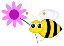 Happy Bee with Flower. Graphic illustration of cartoon bee holding pink flower against white background Royalty Free Stock Image