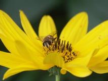 Happy bee Stock Photos