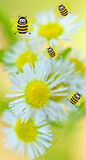 Happy bees on flower background Royalty Free Stock Photo