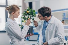 Biologists. Happy biologists looking through magnifying glass on lemon plant in laboratory Royalty Free Stock Images