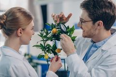 Biologists with magnifying glass and plant. Happy biologists looking through magnifying glass on lemon plant in laboratory Royalty Free Stock Photos