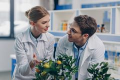 Biologists in white coats with lemon plants. Happy biologists in white coats with lemon plants in laboratory Stock Images