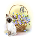 Happy birday card. Siamese kitten, butterfly and basket with vio Stock Image