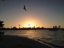 Happy birds. Birds enjoying Mother nature& x27;s beauty and beautiful sun set Stock Images