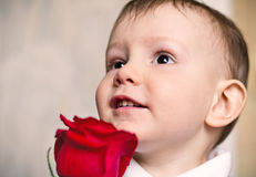 Happy birthday!. Nice little boy wishes mum happy birthday gives  flower  red rose Stock Photo