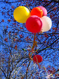 Happy Birthday!. Picture of the balloons as a symbol of birthday (Happy Birthday Royalty Free Stock Images