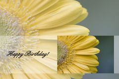 Happy Birthday!. Yellow Gerber Daisy with Happy Birthday Text Great to use for Cards stock photo