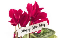 Happy Birthday Card with Bouquet of Cyclamens Royalty Free Stock Photography