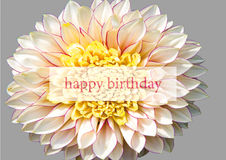 Happy Birthday greeting card with creme white dahlia and text
