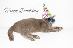 Happy birthday card with funny cat. Wearing sunglasses and party hat Royalty Free Stock Image