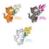 Happy birthday Cat Stock Image