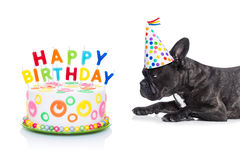Happy birthday dog and cake. French bulldog dog  hungry for a happy birthday cake with candles ,wearing party hat  , isolated on white background Stock Photos