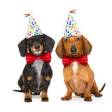 Happy birthday dog. Couple of two dachshund or sausage  dogs  hungry for a happy birthday cake with candles ,wearing  red tie and party hat  , isolated on white Royalty Free Stock Image