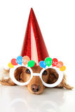 Happy Birthday dog stock photo