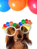 Happy Birthday dog Stock Image