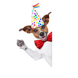 Happy birthday dog Stock Photography