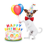 Happy birthday dog. Jack russell dog  as a surprise with  happy birthday cake ,wearing  red tie and party hat ,holding balloons , isolated on white background Stock Photos