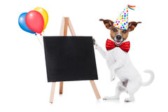 Happy birthday dog Royalty Free Stock Photos
