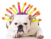 Happy birthday dog Royalty Free Stock Photo