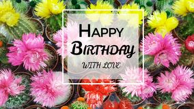 Happy Birthday Greeting Card with Cacti Flowers Background. Happy Birthday greeting card with blooming succulent flowers background stock photos