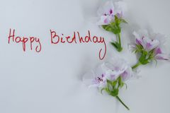 Happy birthday greeting card with fresh flowers on white background. Space for text royalty free stock photos