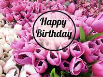 Happy Birthday Greeting Card with Tulips Flowers Background. Birthday greeting card with blooming pink Tulips flowers background royalty free stock images