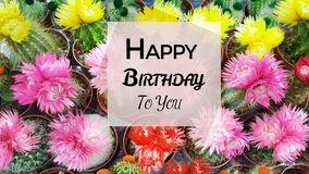 Free Happy Birthday Greeting Card With Cacti Flowers Background Royalty Free Stock Images - 107307559