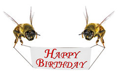 Happy Birthday!. Honey bees with Happy Birthday greeting banner isolated on a white background Royalty Free Stock Images