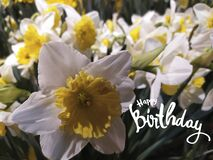 Happy Birthday horizontal greeting card. White narcissus flowers and hand-lettered greeting phrase