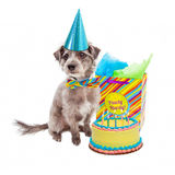 Happy Birthday Party Dog Royalty Free Stock Image
