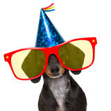 Happy  birthday party dog. Dachshund or sausage  dog ,wearing  red sunglasses and party hat  , isolated on white background Royalty Free Stock Images