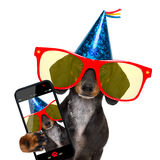 Happy  birthday party dog. Dachshund or sausage  dog ,wearing  red sunglasses and party hat  , isolated on white background, taking a selfie with a smartphone or Stock Photography